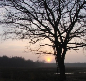 019-Stiel-Eiche-Quercus-robur-L.-Klasing-