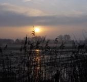 001-Feuchtwiese-Sonnenaufgang-L.-Klasing-