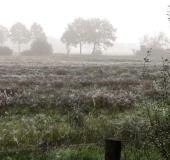 002-Feuchtwiese-am-Morgen-L.-Klasing-