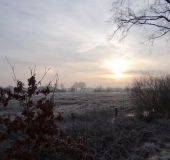 003-Feuchtwiese-Sonnenaufgang-L.-Klasing-