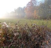 035-Feuchtwiese-Im-Herbst-L.-Klasing-