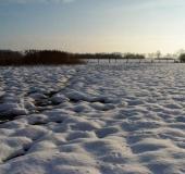 040-Feuchtwiese-Blänke-im-Winter-L.-Klasing-