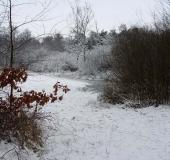 005 Neujahr im Venn 01.01.2010 L. Klasing