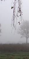 003-Herbst-Im-Emsdettener-Venn-L-Klasing