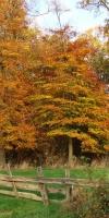 002-Herbststimmung-Im-Emsdettener-Venn-L-Klasing