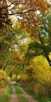 004-Herbststimmung-Im-Emsdettener-Venn-L-Klasing