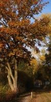 007-Herbststimmung-Im-Emsdettener-Venn-L-Klasing