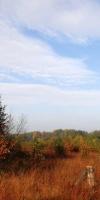 011-Herbststimmung-Im-Emsdettener-Venn-L-Klasing