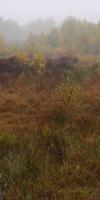 018-Herbststimmung-Im-Emsdettener-Venn-L-Klasing