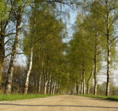 Frühling: Birke (Betula spec.)-L. Klasing