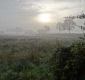 Feuchtwiese: Sonnenaufgang