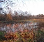 Feuchtwiese: Im Herbst
