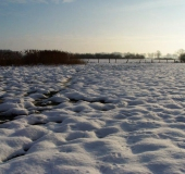 Feuchtwiese: Blänke im Winter