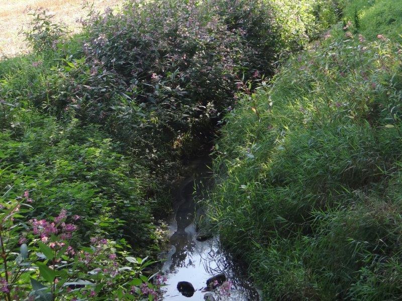 Hummertsbach: Westumer Landstr. am Regenwasser-Rückhaltebecken-L. Klasing