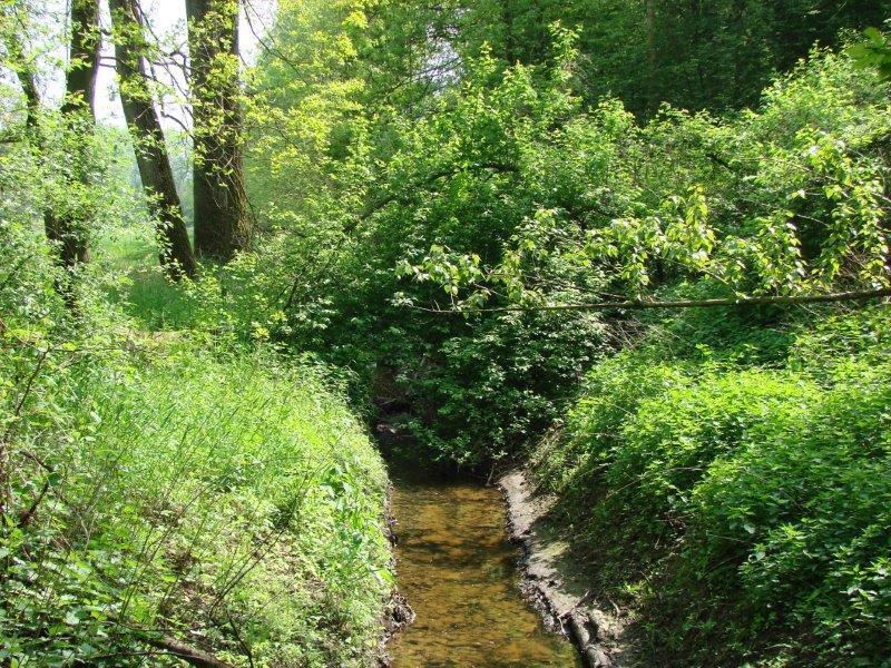 Hummertsbach: Nähe Wasserwerk Ortheide-L. Klasing