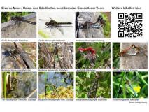 Tafel Libellen im Emsdettener Venn
