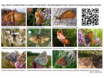 Tafel Schmetterlinge im Emsdettener Venn