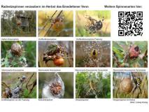 Tafel Spinnen im Emsdettener Venn