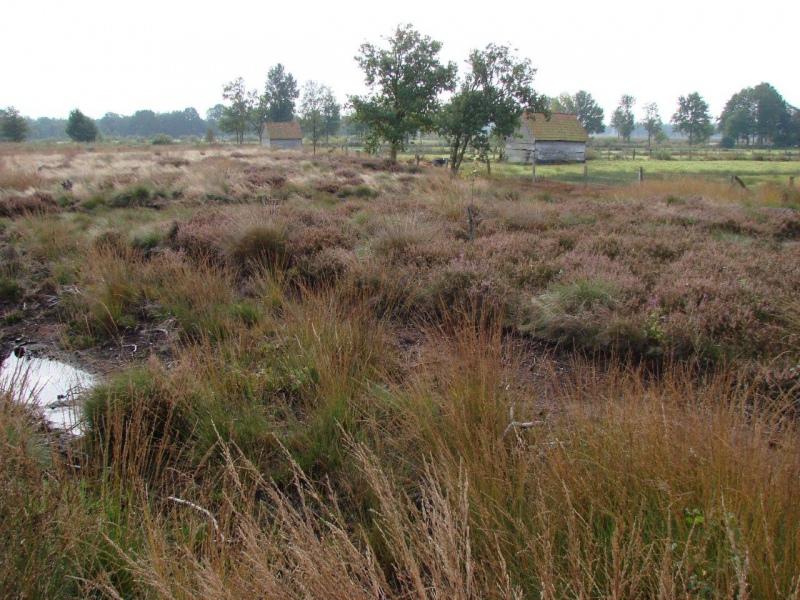 Recker Moor: Impressionen 2008