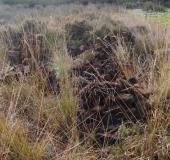 002-Torfdiemen-wurden-wieder-zerstört-30.10.2017-L.-Klasing