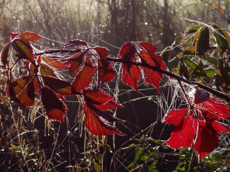 001-Herbst-Im-Emsdettener-Venn-L-Klasing