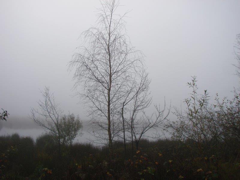 002-Herbst-Im-Emsdettener-Venn-L-Klasing