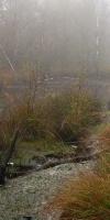 005-Herbst-Im-Emsdettener-Venn-L-Klasing