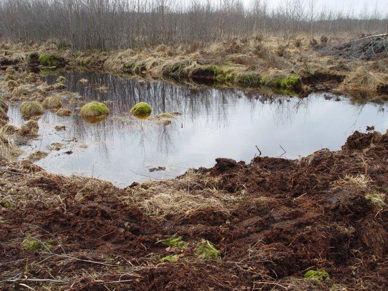 008-10-03-2006-Wasserstand-In-Der-Faulbaumecke