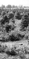 008-Zum-Trocknen-Reihte-Sich-Dieme-An-Dieme