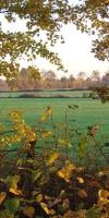 010-Herbststimmung-Im-Emsdettener-Venn-L-Klasing