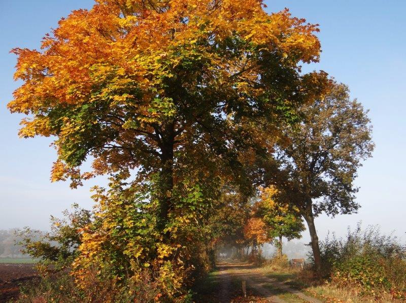 012-Herbststimmung-Im-Emsdettener-Venn-L-Klasing
